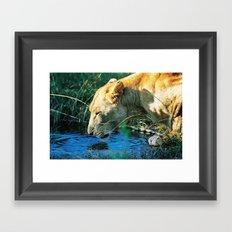 Lion Drinking Framed Art Print