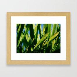 Cabbage Tree Framed Art Print
