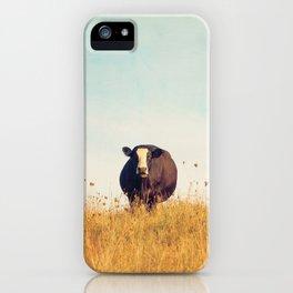 Moooo -- Autumn Landscape -- Cow in a Pasture iPhone Case