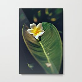A wonderful tropical flower Metal Print