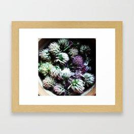 Chive flowers Framed Art Print