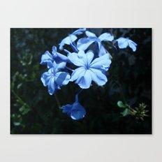 Flowers #1 Canvas Print