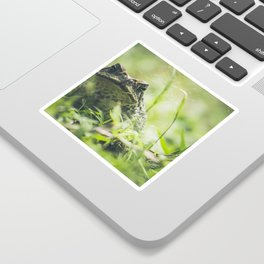 Animal Photography - Big Toad Sticker