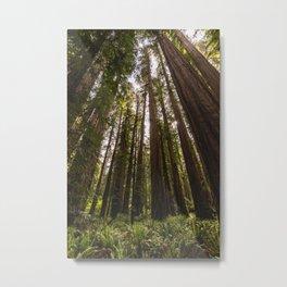 Among Giants II - 60/365 Metal Print