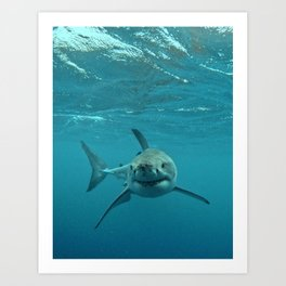 Great White Shark Carcharadon carcharias Art Print