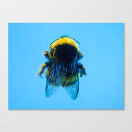 Bugged #32 Canvas Print