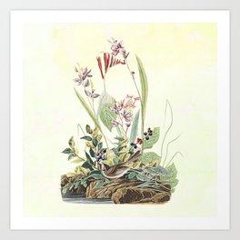 Adventures with Audubon Art Print