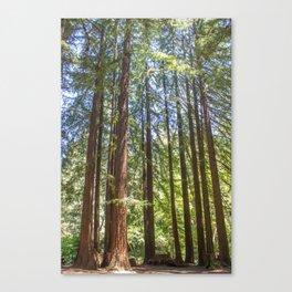 Redwood Grove Canvas Print