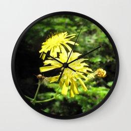 Watercolor Flower, Canada Hawkweed 02, Cape Breton, Nova Scotia, Canada, Beauty and the Beast Wall Clock