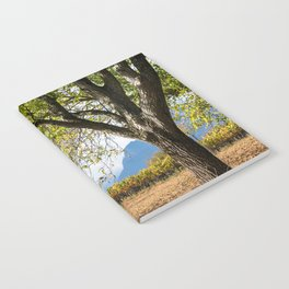 Oak And Grapevines Notebook