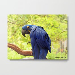 Pretty Boy Metal Print