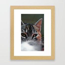 Intense Look Framed Art Print