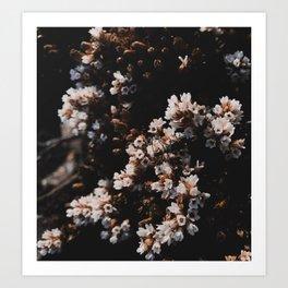 Wildflower Series - Hartz Peak Art Print