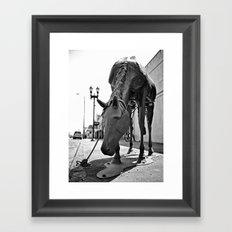 Urban horse Framed Art Print