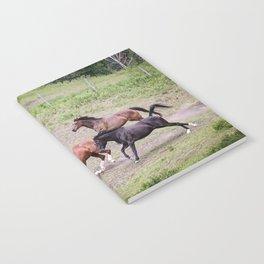 Running Herd Notebook
