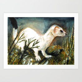 Winter stoat watercolor Art Print
