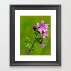 Common Mallow (Cheeseweed) Framed Art Print