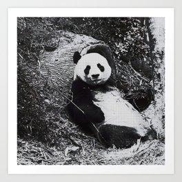 Urban Pop Art Panda Art Print