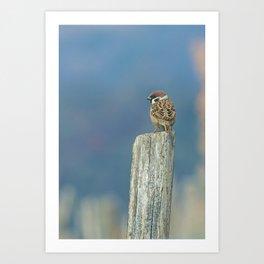 Passerotto-young sparrow Art Print