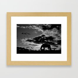 Evening Grazing Framed Art Print