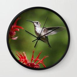 Hummingbird Beauty Wall Clock