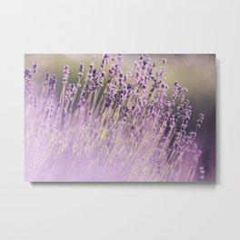 Spring Purple II Metal Print