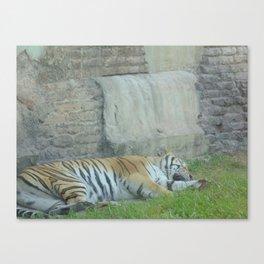 Sleeping Tiger at The Animal Kingdom Canvas Print