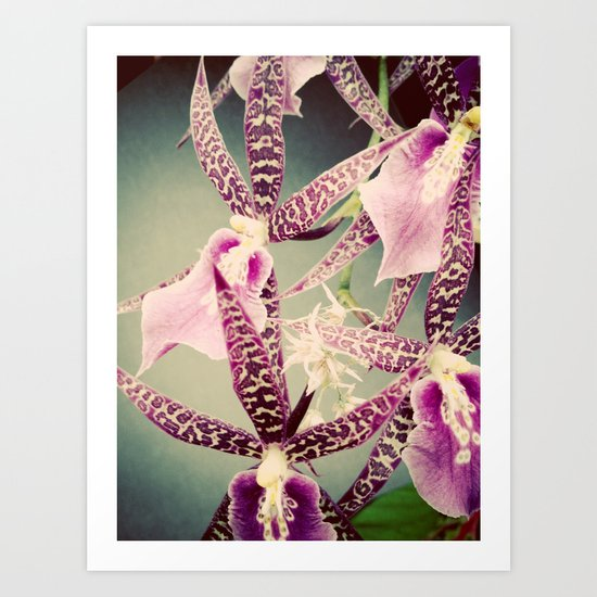 Orchid Love 2 Art Print