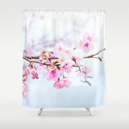Japanese cherry-blossom tree, 'Oh-kanzakura' Shower Curtain