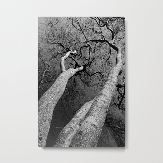 Monochrome Trees Metal Print