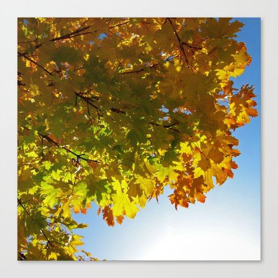 autumn tree III Canvas Print