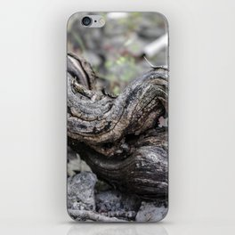 Abandoned vine stock iPhone Skin