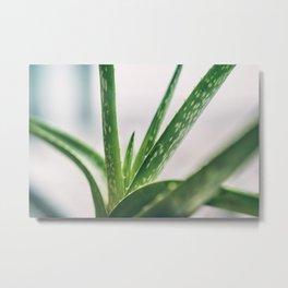 aloe vera plant texture Metal Print