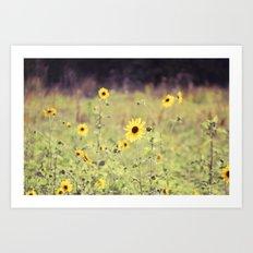 Sunny Meadow -- Yellow Wildflowers Botanical Landscape Art Print