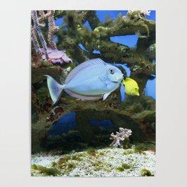 Sea Blue Fish Poster