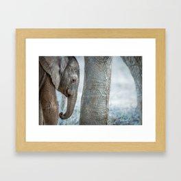 Sleepy baby Elephant Framed Art Print