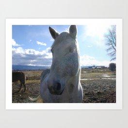 #406 horse bitterroot mt Art Print
