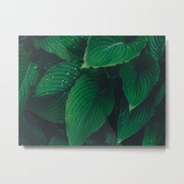 Moist Leaves Metal Print