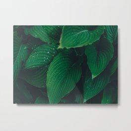 Moist Leaves Metal Print