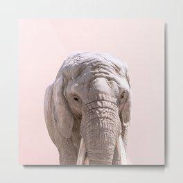 Elephant Portrait and Pink Sky Metal Print