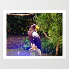 steller's sea eagle Art Print