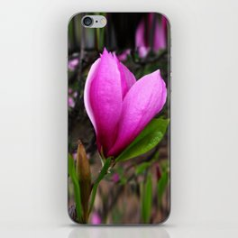 Spring Magnolia iPhone Skin