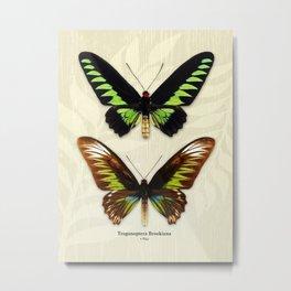 Butterfly15_Trogonoptera Brookiana • pair Metal Print