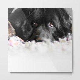 Rug Dog Metal Print
