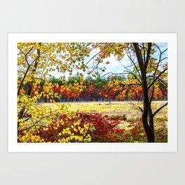 Candia Rail Trail Swamp in Autumn Art Print