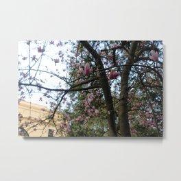 Savannah is blooming, pt. 1 Metal Print
