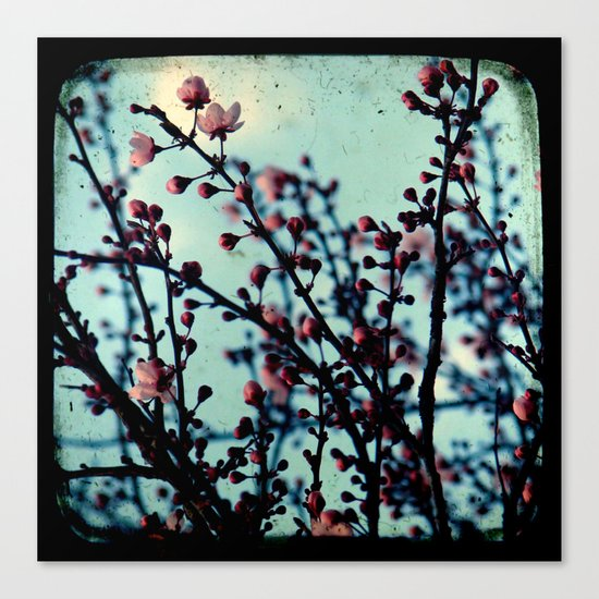 Spring Blossoms - Through The Viewfinder (TTV) Canvas Print