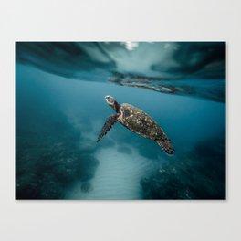 Take a peek Canvas Print