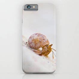 Hermit crab on the beach of Cayo Levisa   Travel photography Cuba iPhone Case