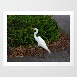 Great Egret On Prowl >> Egret Art Prints Society6